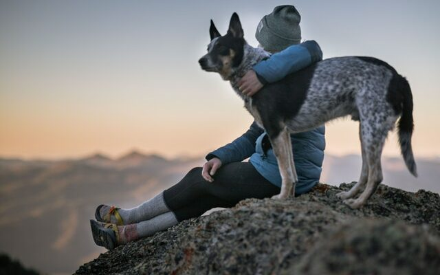 Travelling With Pets In This Winter